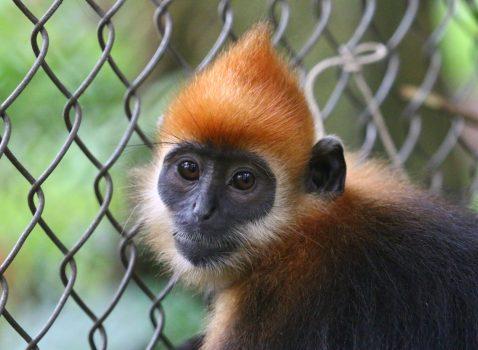 Photoshoot-Primates-NatGeo-story-5